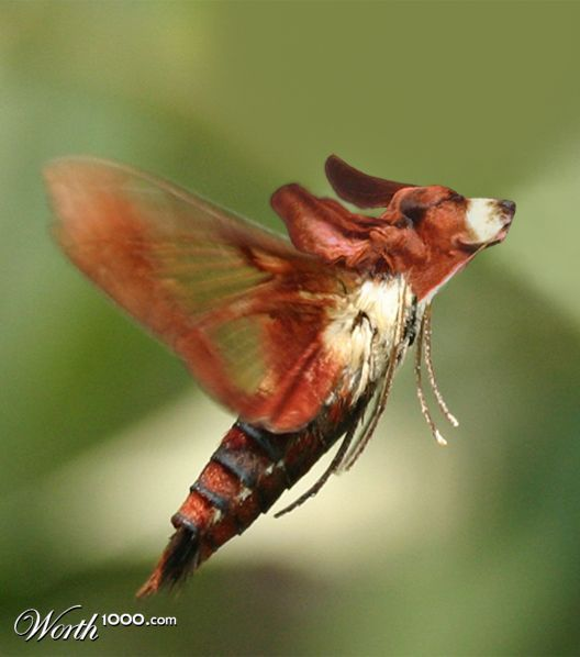 Write an imaginary story about insects