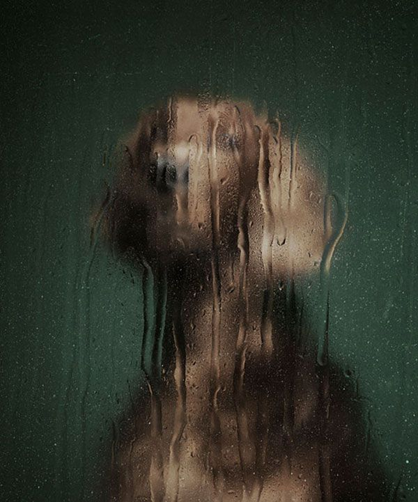 Martin Usborne Abandoned dogs photographed through different materials.