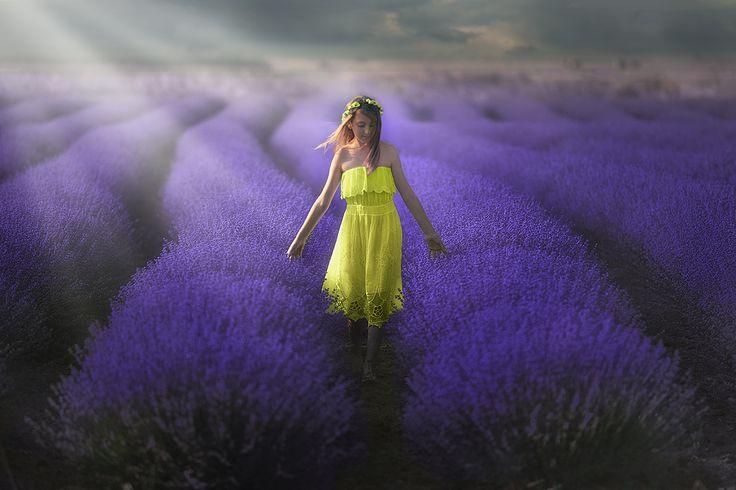 Through lavender by Christos Lamprianidis on 500px
