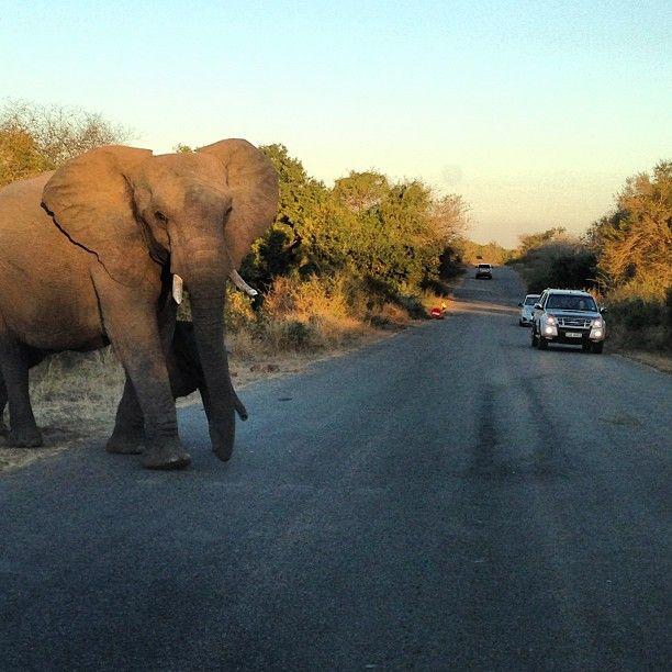 Kruger National Park, Mmpumalanga, South Africa