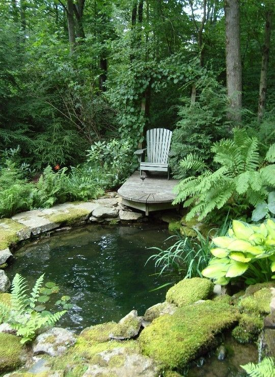 Mossy stones and enveloping ferns and hostas integrate this cool pond and solitary sitting area into the woodland garden.  ah...... to be sitting there with a cup of coffee.....
