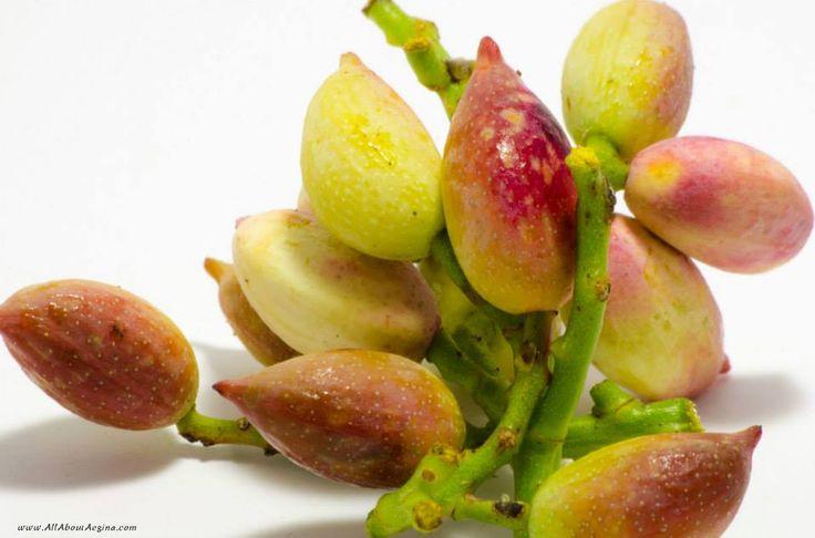 Fresh pistachios, Aegina