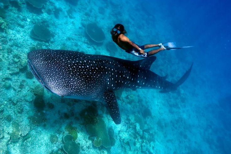 Zij aan zij zwemmen met de grootste vis ter wereld is een onbeschrijflijke ervaring. Dit zijn de vijf beste plekken om walvishaaien te spotten.