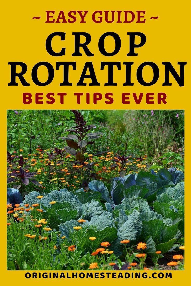 Vegetable Garden Crop Rotation Garden Guide Vegetable Garden