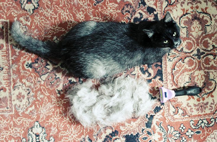 the FURminator!  Gunner and the fur.