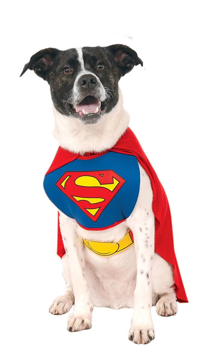 Best 25+ Large dog halloween costumes ideas only on Pinterest ...