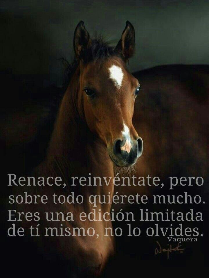 Renace, reinvéntate a tí mismo...