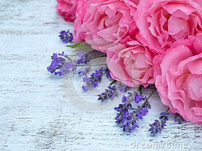 Bright pink roses and lavender bouquet on the white painted rustic background
