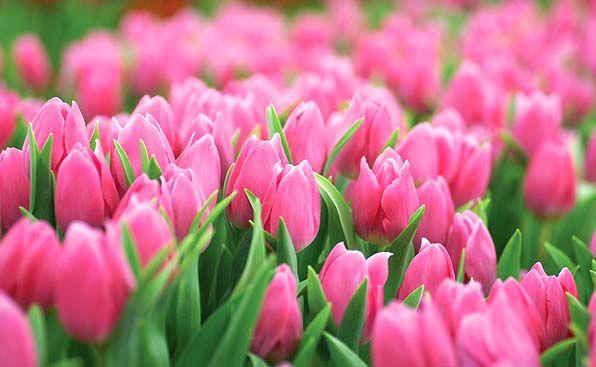 http://www.boatshedmarket.com.au/image/data/flowers_img.jpg adresinden görsel.