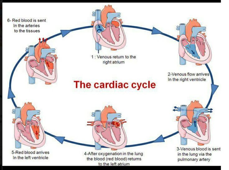 cardiac nurse | Cardiac Cycle | Nursing