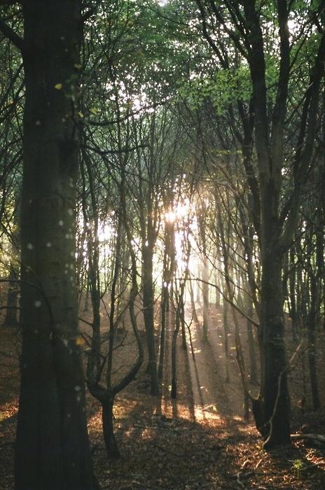 Light (taken with Foigtländer vito CL)