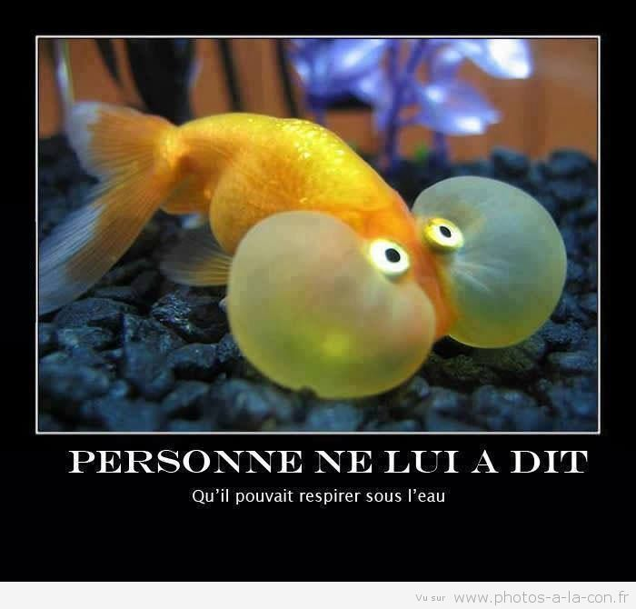 image drole poisson.   En Anglais: Nobody told him he could breath underwater!