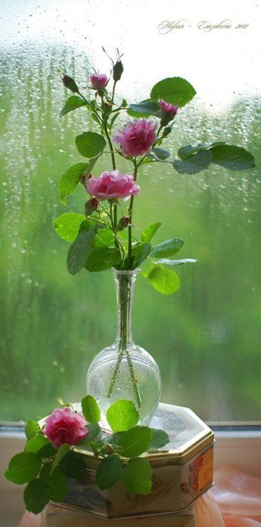 photography art still life wonderful by Bakh MariyaPink Flower, Iphone App, Wedding Ideas, Bouquets, Windows, Wedding Planners, Pink Rose, Rain, Cut Flower