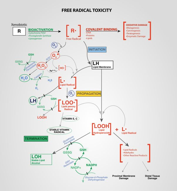 Free Radical Toxicity - Oxidative stress - Wikipedia, the free encyclopedia