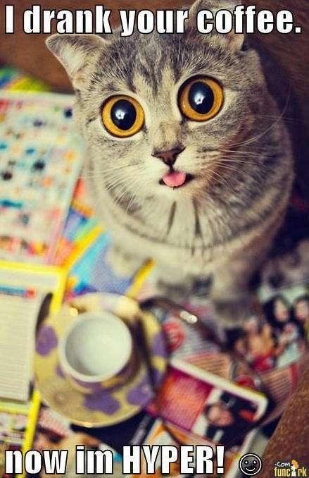 Hyper Cat Videos