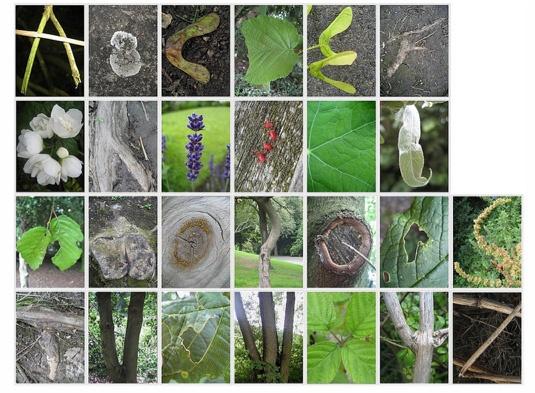 alphabet nature