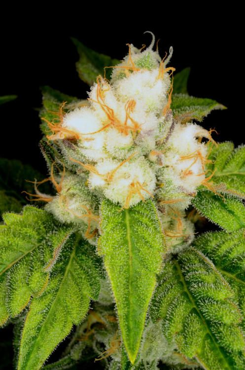 Mmmm...... space ghost weed have you floating in the sky...