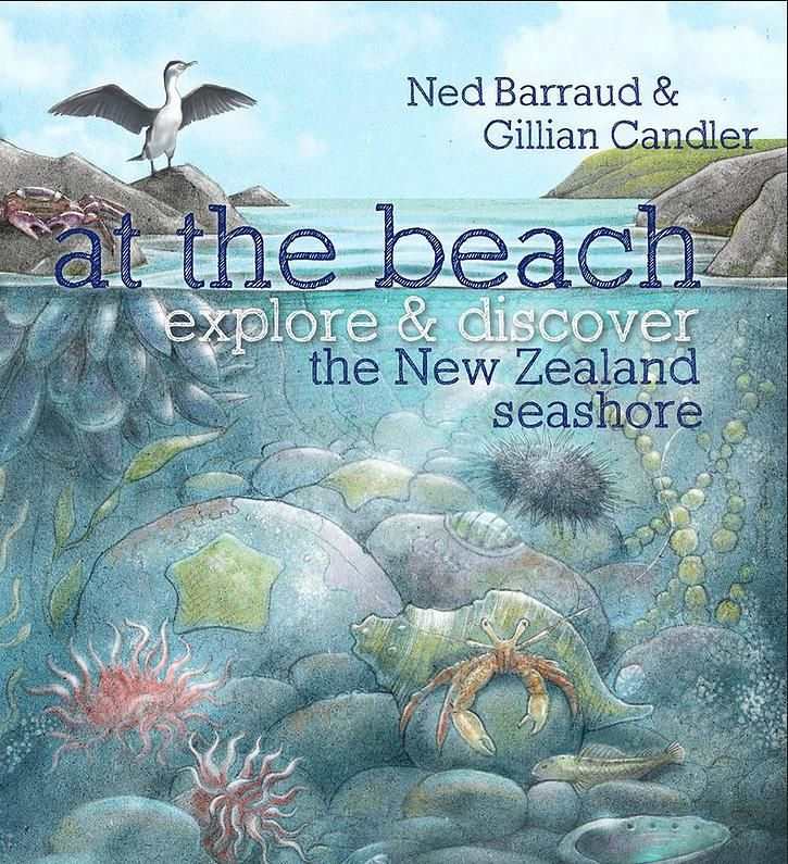 Cover from At the Beach published by Potton & Burton. Finalist in the NZ Children's book awards. First book from the Explore and Discover series. Non ficton book for kids. http://www.nedbarraud.com/