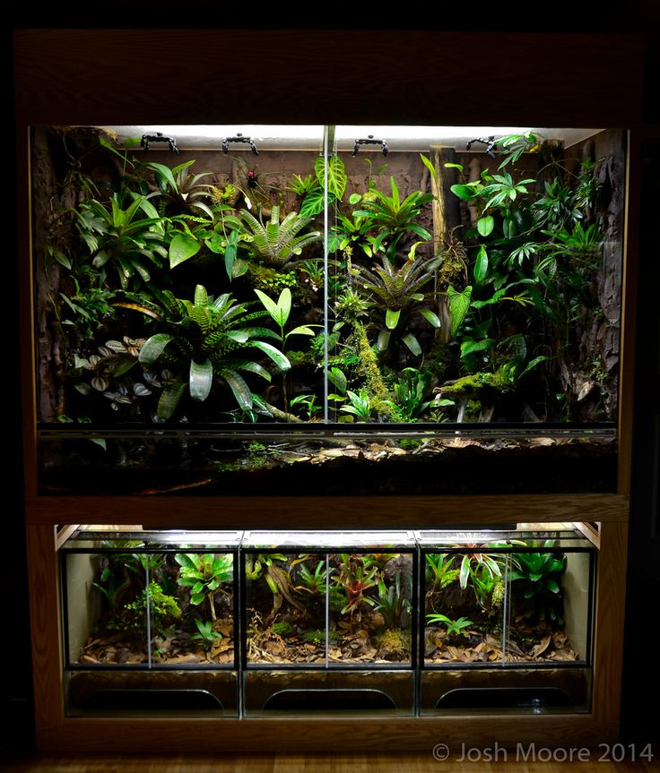 17 Best Images About Reptiles Reptile Enclosures On