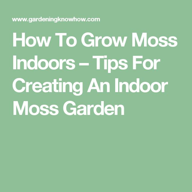 how to grow moss indoors tips for creating an indoor moss garden moss garden gardens and plants. Black Bedroom Furniture Sets. Home Design Ideas