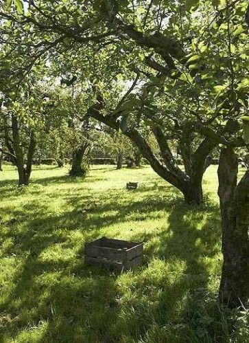 apple trees - just one supplied me with enough apples for 3 months