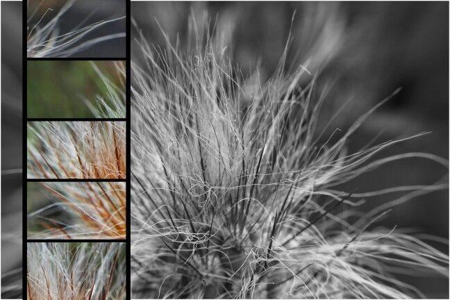 Variations cactus