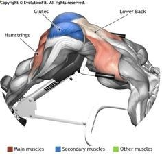 Excersices For Legs At Home and At The Gym - LATS - HYPEREXTENSIONS - Strengthening our legs is an exercise that we are going to make profitable from the beginning and, therefore, we must include it in our weekly training routine