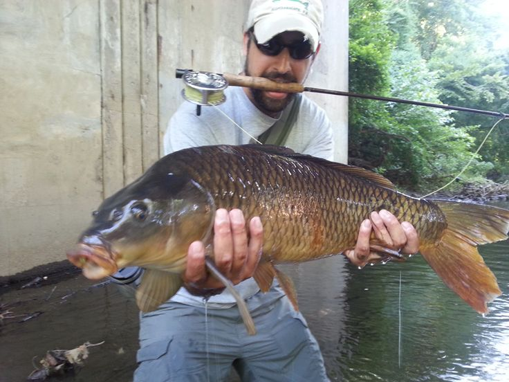 Fish Facts: Everything You Wanted to Know About the Common Carp But Were Afraid to Ask
