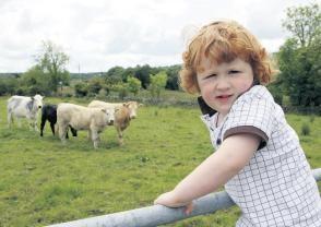 Ten best Irish Famrstays