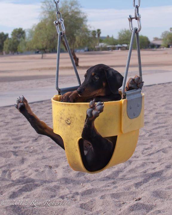 Push the swing, push the swing!