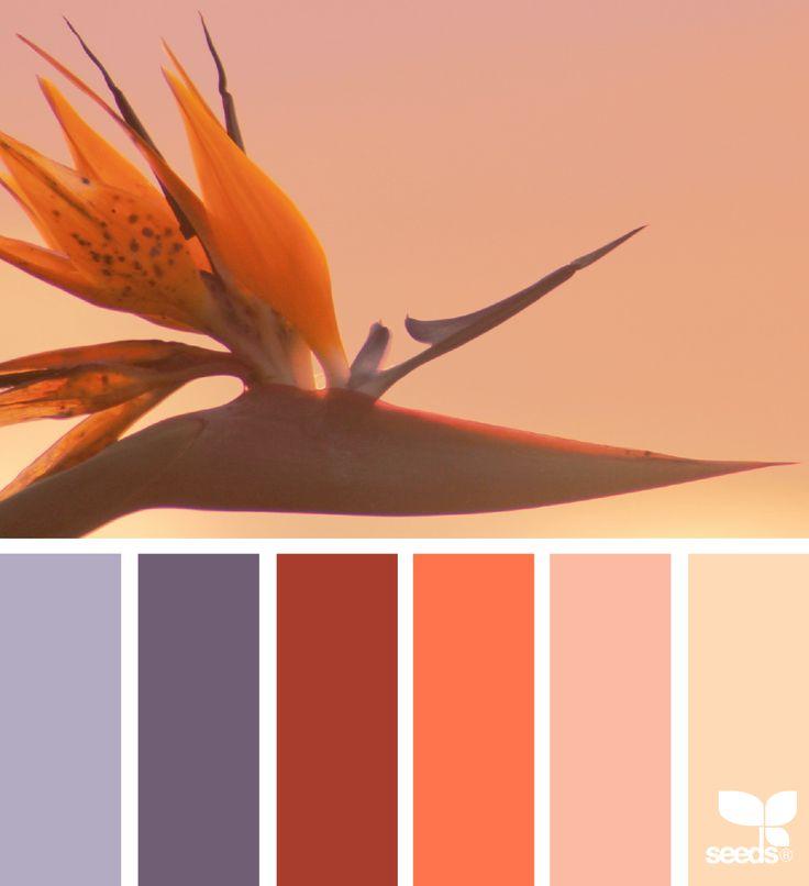 Color Paradise - https://www.design-seeds.com/in-nature/flora/color-paradise