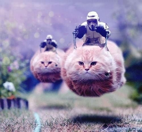 Lol I'm dying ! Star Wars speed bike kitties