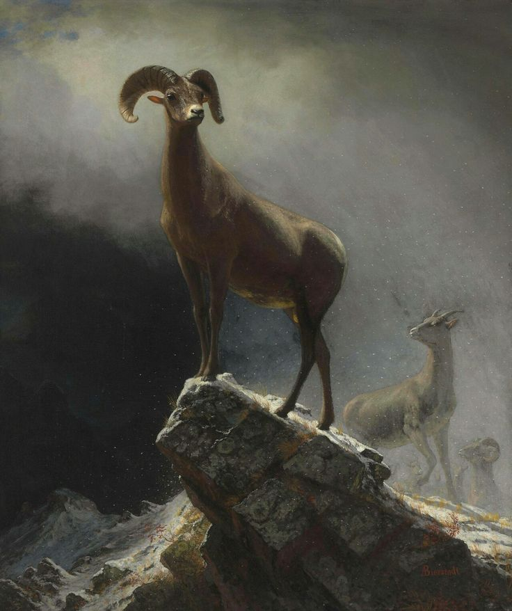Rocky Mountain Sheep or Big Horn, Ovis, Montana, 1884, Albert Bierstadt