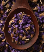 Homeopathic remedies are based on a holistic approach to health that addresses illness by stimulating the body's own healing powers. [more] http://herbalremediestlc.com/naturalremedies/249/articles/homeopathic-remedies #remedies #articles: Purple Brown, Brown Purple, Dry Lavender, Front Yard, Carrier Oil, Homeopathic Remedies