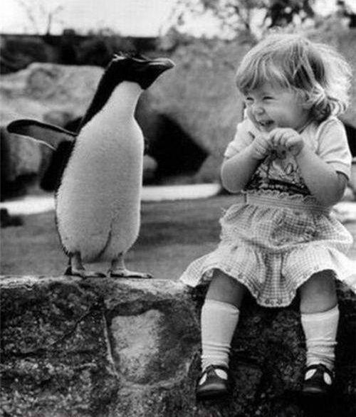 Penguins!!!! I love them