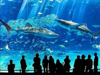Go here for the video in Vimeo.  I would love to be able to see this in person!    http://vimeo.com/5606758: Favorite Places, Okinawa Japan, Whale Sharks, Places I D, Largest Aquarium, Churaumi Aquarium, Okinawa Churaumi, Second Largest