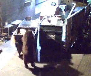 Bear Rolls Garbage Dumpster Away From Restaurant FUNNY VIDEO! http://www.opposingviews.com/i/society/animal-rights/bear-rolls-garbage-dumpster-away-restaurant-video