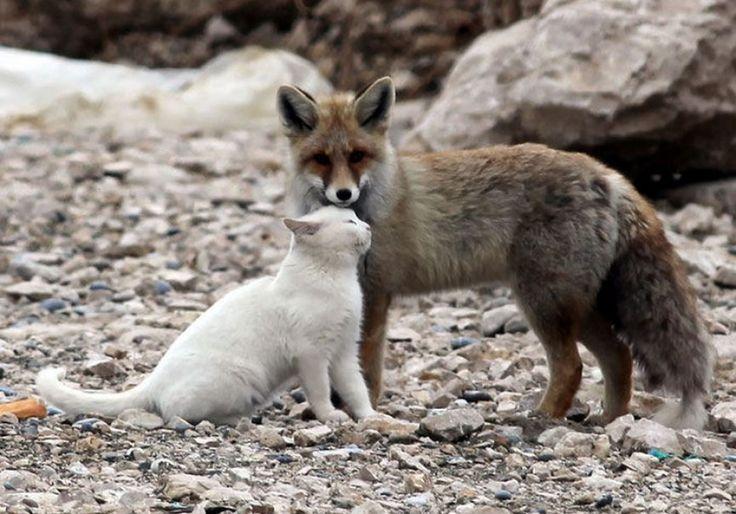 Imagini adorabile cu cele mai bizare prietenii din regnul animal (şi nu numai)