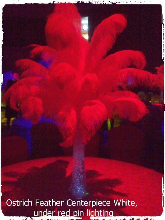 Ostrich featehr centerpiece under red pin lighting