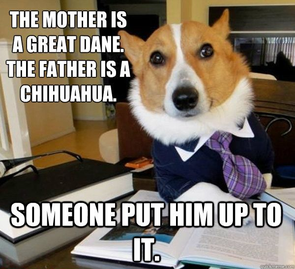 The mother is a Great Dane. The Father is a Chihuahua. Someone put ... via Relatably.com