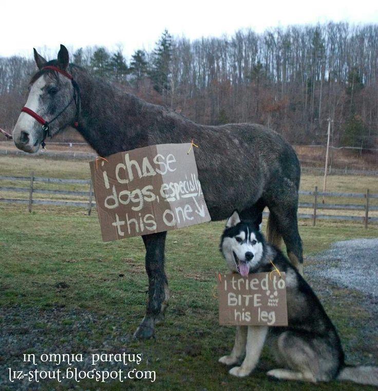 I chase dogs