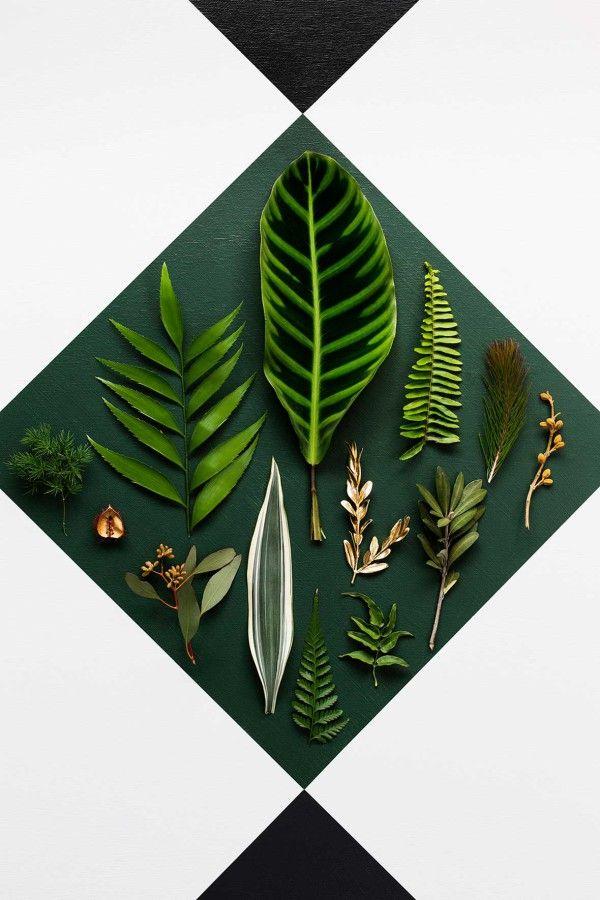 COLOR | Plants