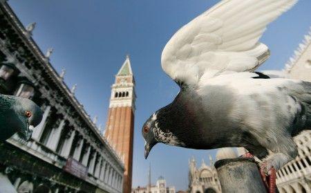 Venedig, Piazetta mit Taube, festgehalten mit einem Superweitwinkelobjektiv. Venedig-Fotoreise http://www.foto-akademie.de/venedig-fotoreise-im-fruehjahr/