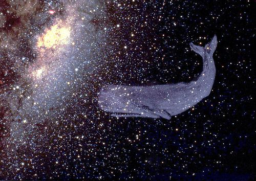 A whale in space. If I saw a whale in space I don't even know what I would do.