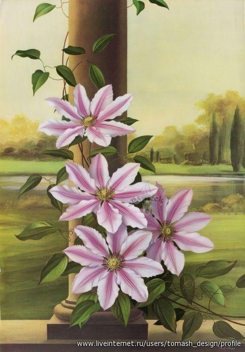 Ботанические иллюстрации автралийского художника Paul Jones (1921-1997). Обсуждение на LiveInternet - Российский Сервис Онлайн-Дневников