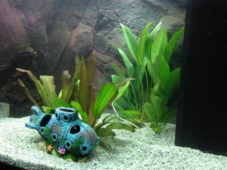 17 best images about aquarium decoratie on pinterest for Decoratie aquarium