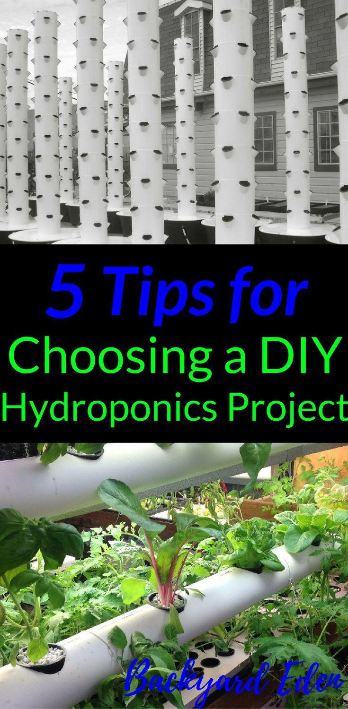 5 Tips for Choosing a DIY Hydroponics Project | Hydroponics | DIY Hydroponics | Hydroponics for beginners | Indoor Hydroponics | Hydroponic Wall | Hydroponic System | Hydroponic Gardening | Homemade Hydroponic systems | Hydroponic Nutrients | Kratky Hydroponics | Greenhouse Hydroponics | Hydroponics Design | Hydroponic Vegetables | Backyard-Eden.com #hydroponics #hydroponicsystem #hydroponicgardening #hydroponicvegetables #backyardeden