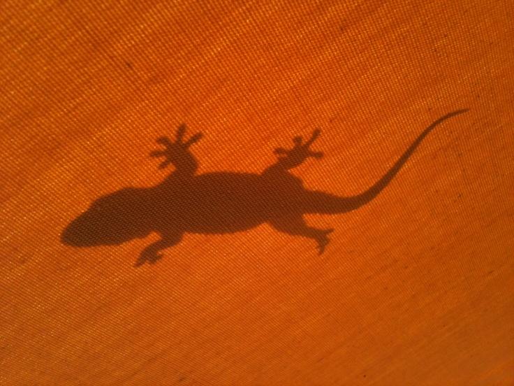 Gecko on a sunshelter, Tamariu, Spain