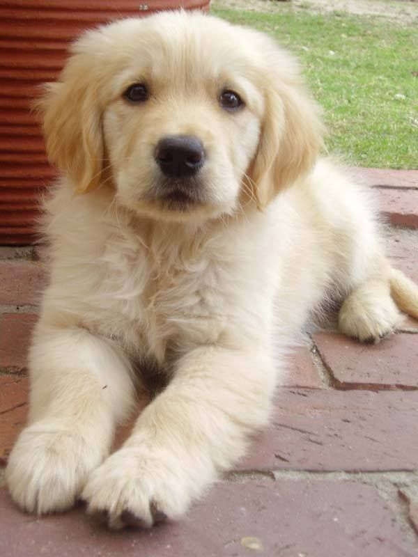 What an adorable puppy!