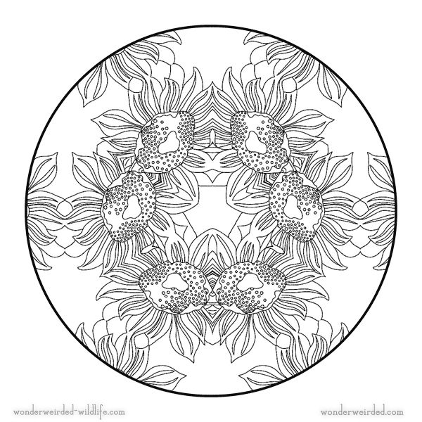 1320 best images about adult coloring pages on pinterest